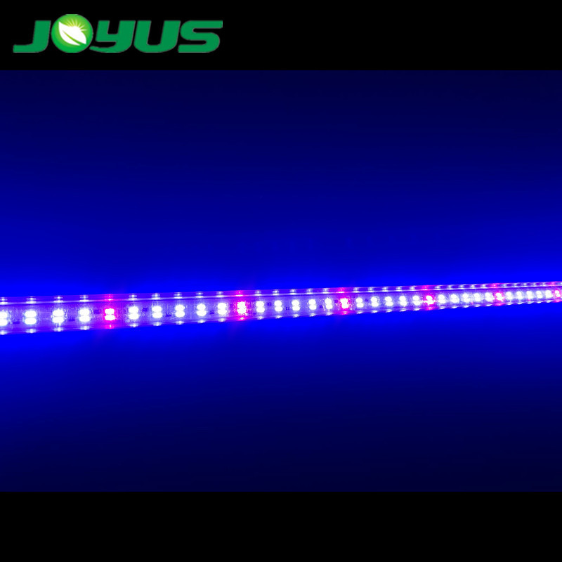 red blue led horticulture growing strips lighting 660nm 450nm DC24V 144 leds/m 30W double rows 5 red : 1 blueKey word 1: blue led